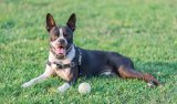 New Research on Dogs & Chiropractic